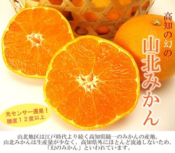 【海外EC注文用】高知県産・山北みかん秀品Mサイズ5kg