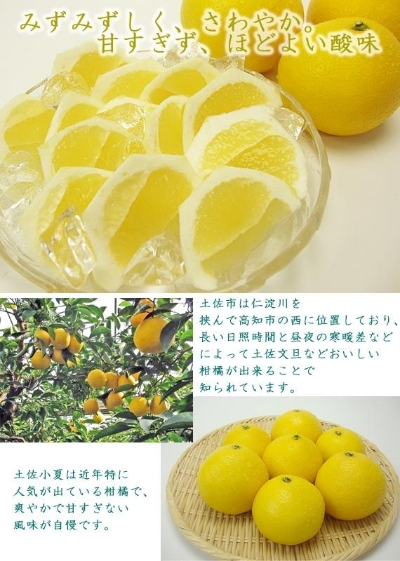 【送料無料】土佐市波介産・温室栽培土佐小夏2Lサイズ(ほぼ2.5kg)