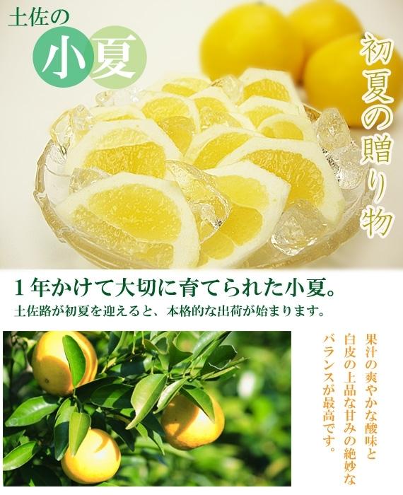 【送料込み】高知県土佐市産・温室栽培 土佐小夏2.5kg