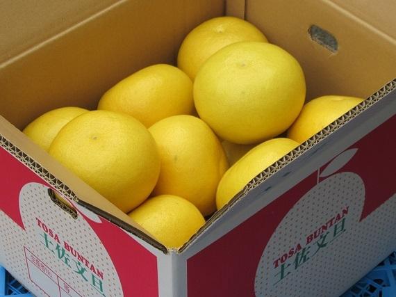【送料込み】宿毛市産 石黒さんの大きな土佐文旦贈答用 3Lサイズ(10kg)