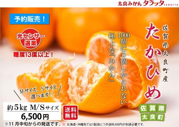 【佐賀県太良産 最高級みかん】たかひめ 約5kg≪Mサイズ≫