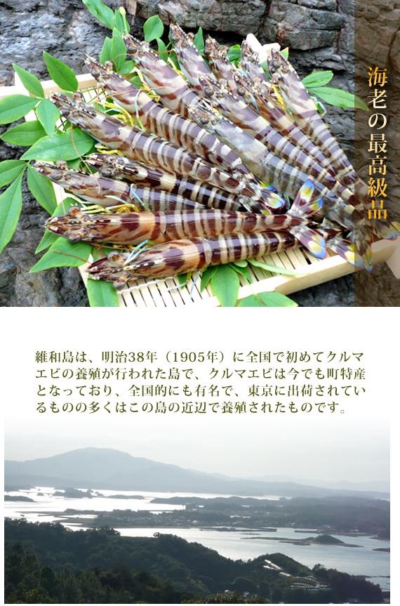 活車海老500g入り(約15〜22尾)