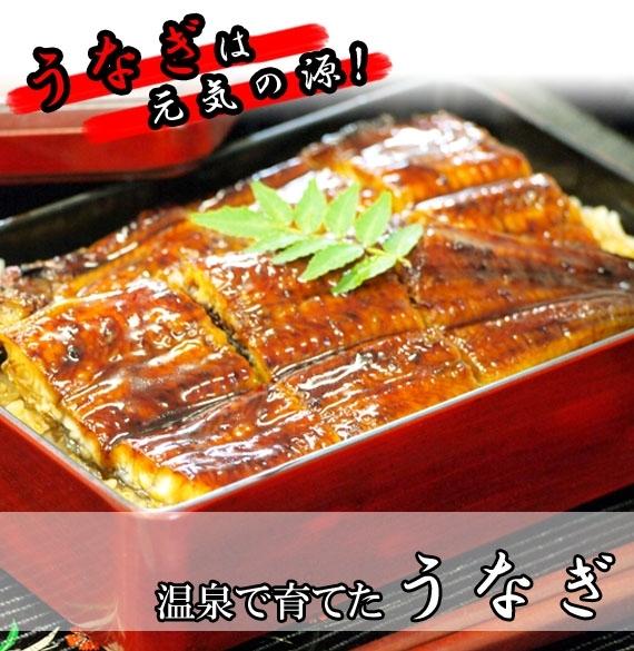 ◆日本ギフト大賞2016大分賞◆【大分県産】温泉で育てたうなぎ蒲焼(特大)【お歳暮2020】【漬魚・魚加工品】