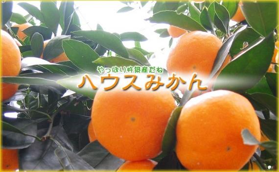 【訳あり】柑橘系果物 あまくさ 4kg 【ハウス栽培】【送料無料】