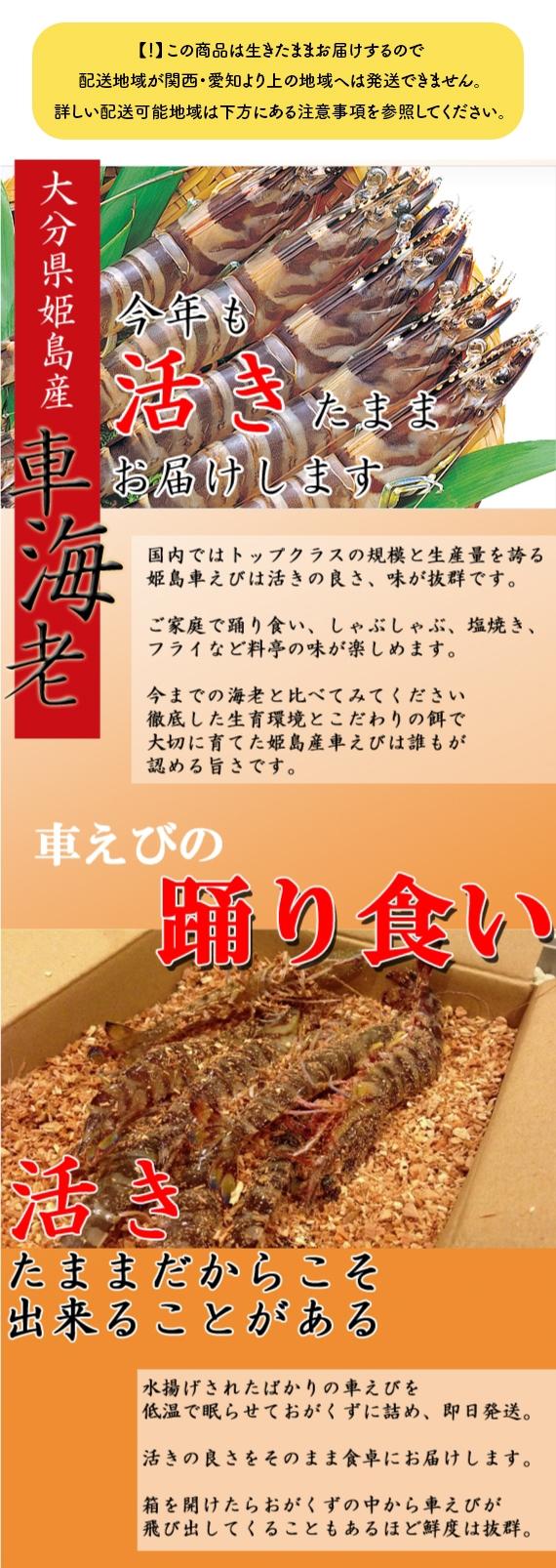 【送料無料】姫島ブランド 活き車えび 500g【エビ】